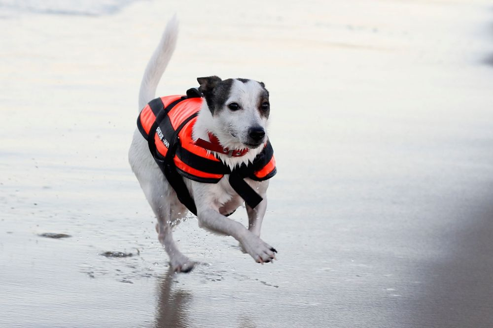 dog life jacket ljdogall